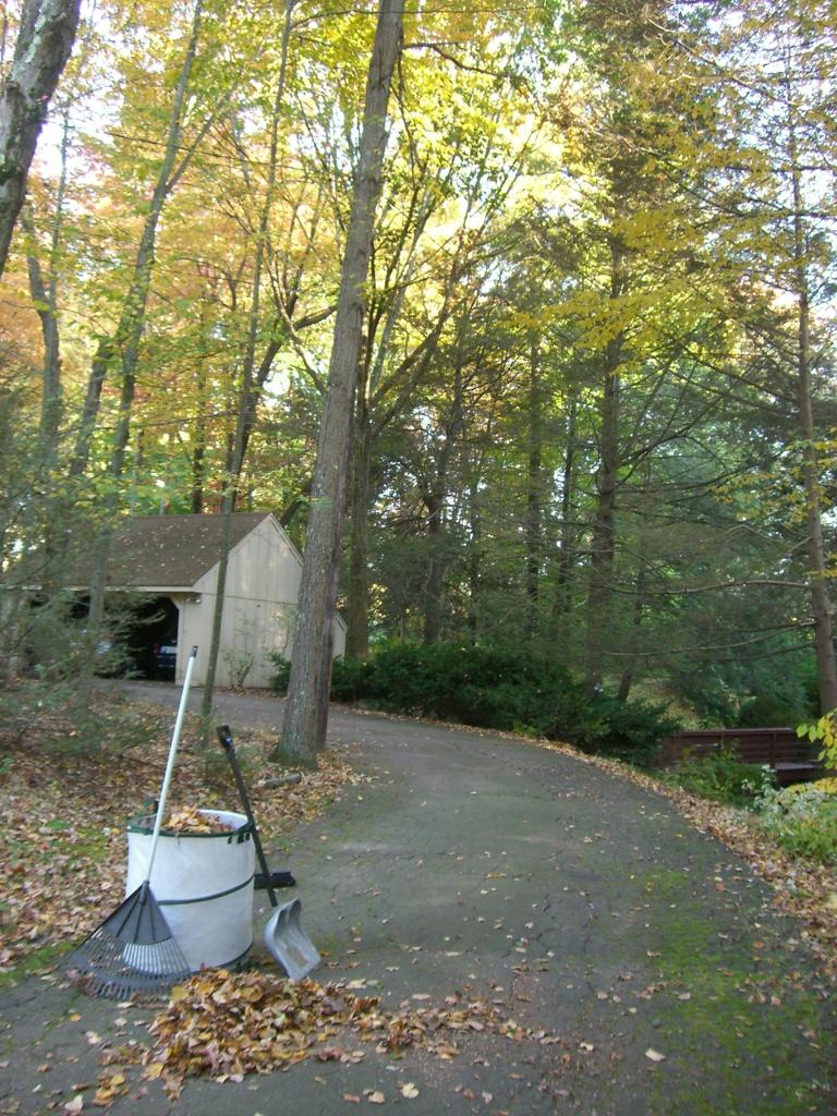 rake_autumn.jpg