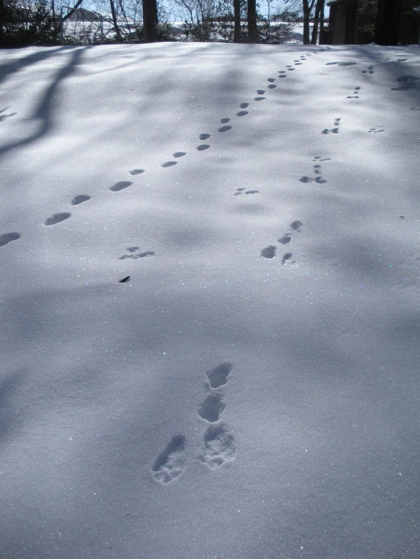 tracks_02.jpg